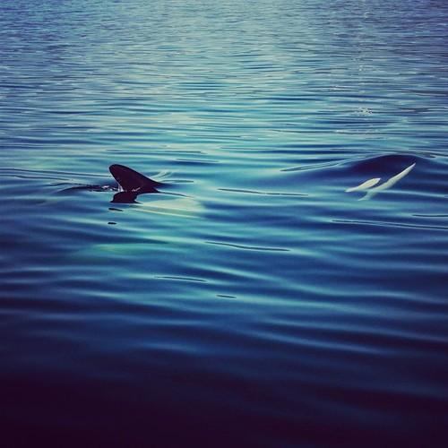 orca @jeremykoreski