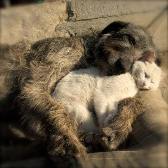 dog cat love - Version 2