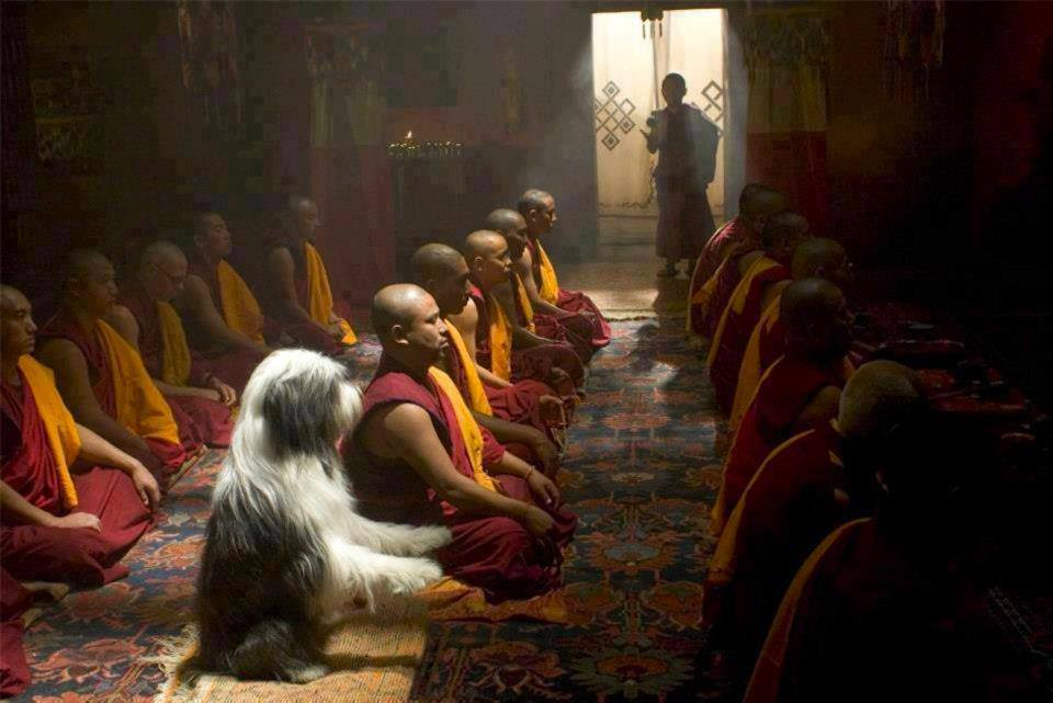 dog meditation buddha monks