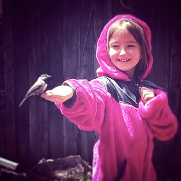 goldman bird chickadee