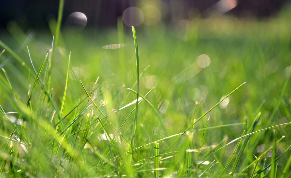 grass sun light