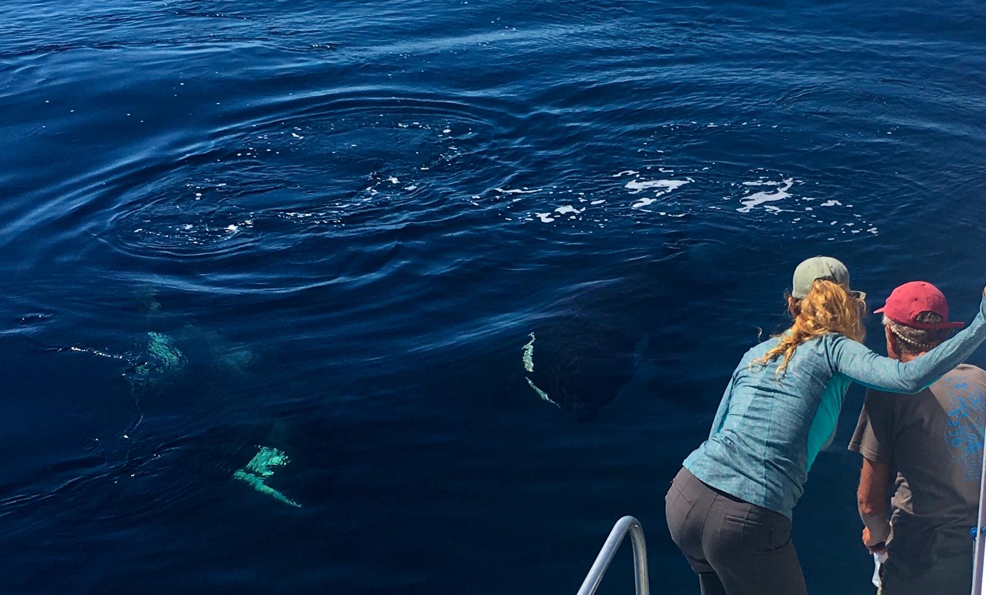 eva orca whales