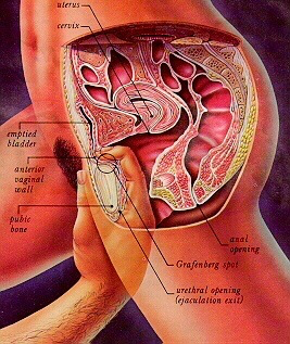 Anatomy of oral sex