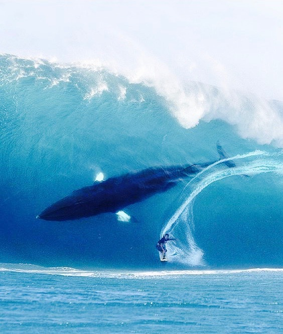 humpback whale surf ocean wave brian browne walker wei wu we ching hexagram 12 stillness