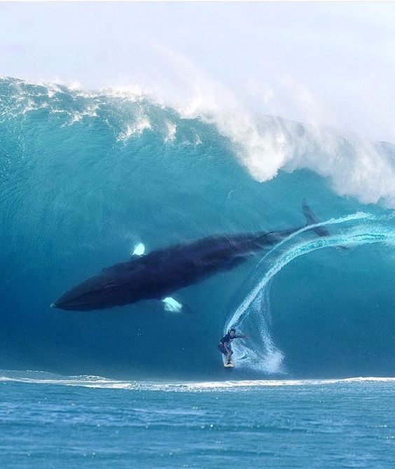 humpback whale surf ocean wave