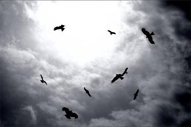 birds-circling